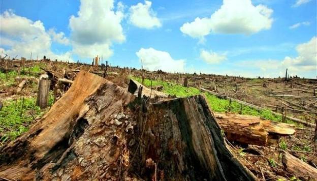 deforestacion_en_la_amazonia_el_especialito.jpg_t750x550
