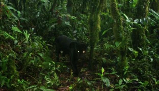10-11-15-jaguar1 (2)