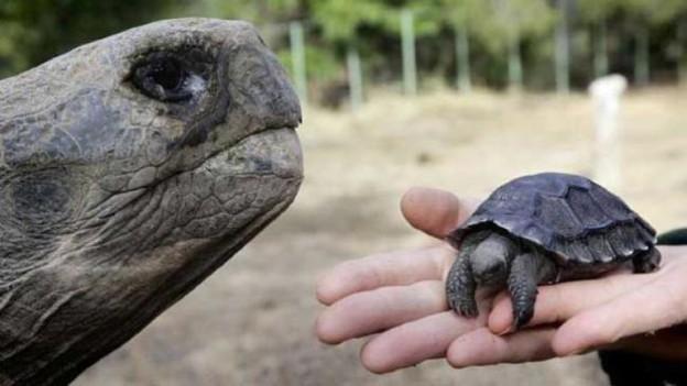 271112-tortugas-bebe-1