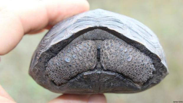 271112-tortugas-bebe-3-640x360