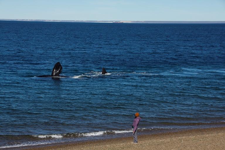 Indira en Puerto Madryn. Foto