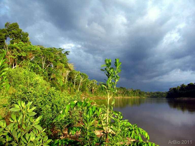 bosque-amazonia-1