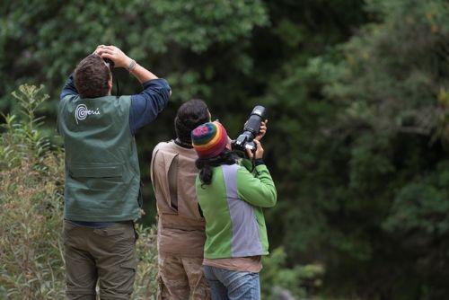 Perú, paraíso aviar, mucho por hacer. Foto: Andina.