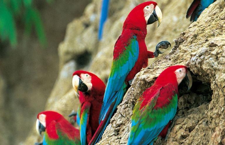 La fiesta de los colores y las formas: Manu y Tambopata. Fpto: Andina