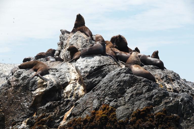Biodiversidd del Mar Tropical. Foto Bruno Monteferri, SPDA
