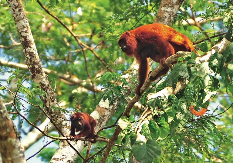El Parque Nacional Alto Purús es un paraíso de la biodiversidad. Foto de Michell León, APECO/WWF