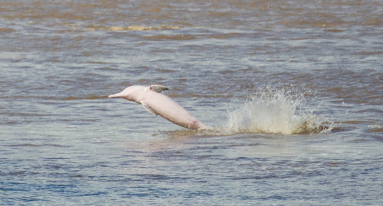 Saltos de acróbatas en el río Aypena. Sebastián Castañeda / WWF Perú