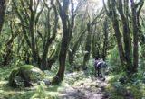 1-intimpas-del-ampay-programa-bosques-andinos