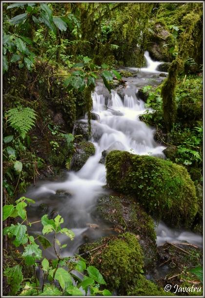 Las intimpas alojan una variedad muy grande de epifitas, desde musgos hasta orquídeas. Lamentablemente, todavía persiste en la población de Abancay la costumbre de utilizar el musgo como adorno en los nacimientos de Navidad. Foto del Programa Bosques Andinos