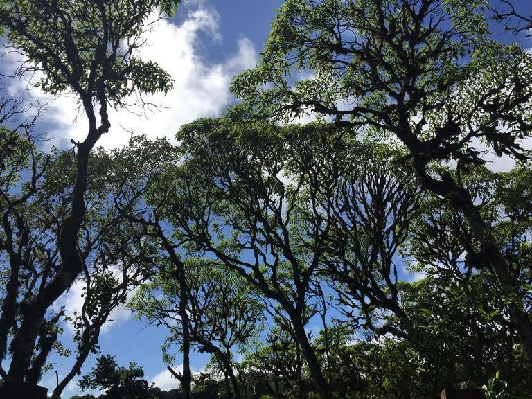 scalesia-trees-on-santa-cruz_cf55fb1d_1200x900