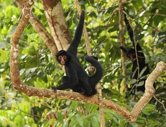 villa-carmen-conservacion-amazonica-acca
