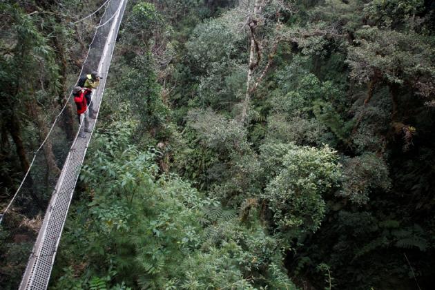 Canopy en Wayqecha. Foto Chema Fomentí / Conservación Amazónica ACCA