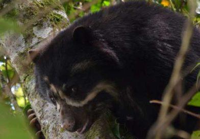 Una mirada a la extraordinaria fauna de Pampa Hermosa [Video]