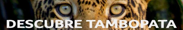 https://www.perunature.com/es/?utm_campaign=Tambopata%20Tours&utm_source=http%3A%2F%2Fsoloparaviajeros.pe%2F&utm_medium=Solo%20para%20viajeros